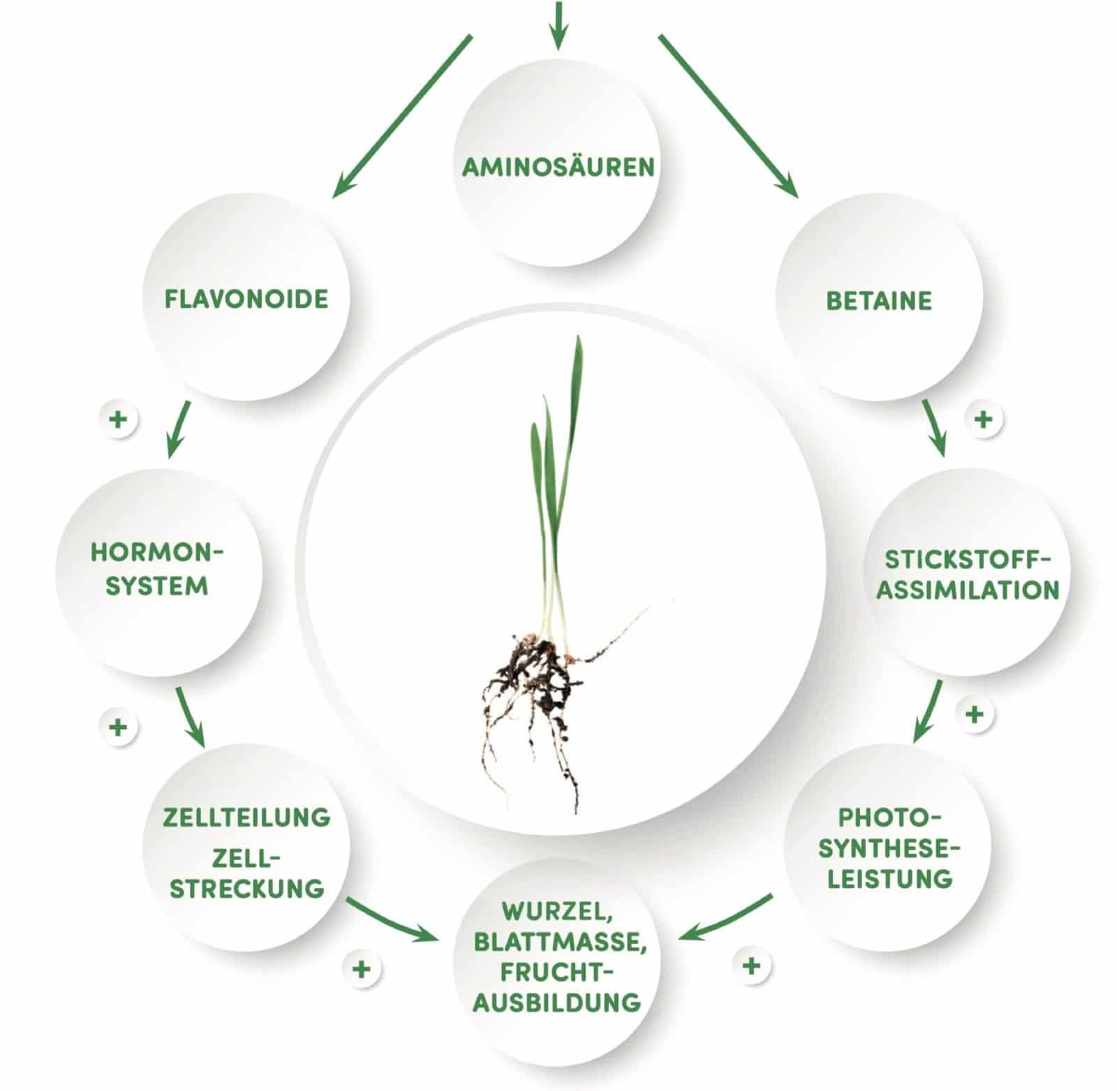 Agronaps Wirkungsprinzip-NAPS